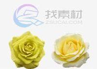 玫瑰花图标下载