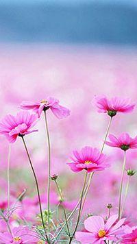 清新粉色小花手机壁纸