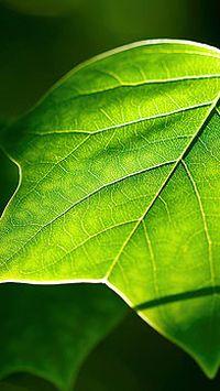 清新绿色树叶手机壁纸大全