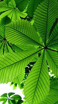 清新绿色树叶智能手机桌面壁纸