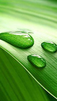 微距水滴绿色植物手机壁纸大全