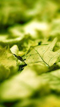 微距水滴绿色植物高清手机壁纸