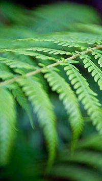 微距水滴绿色植物智能手机桌面壁纸