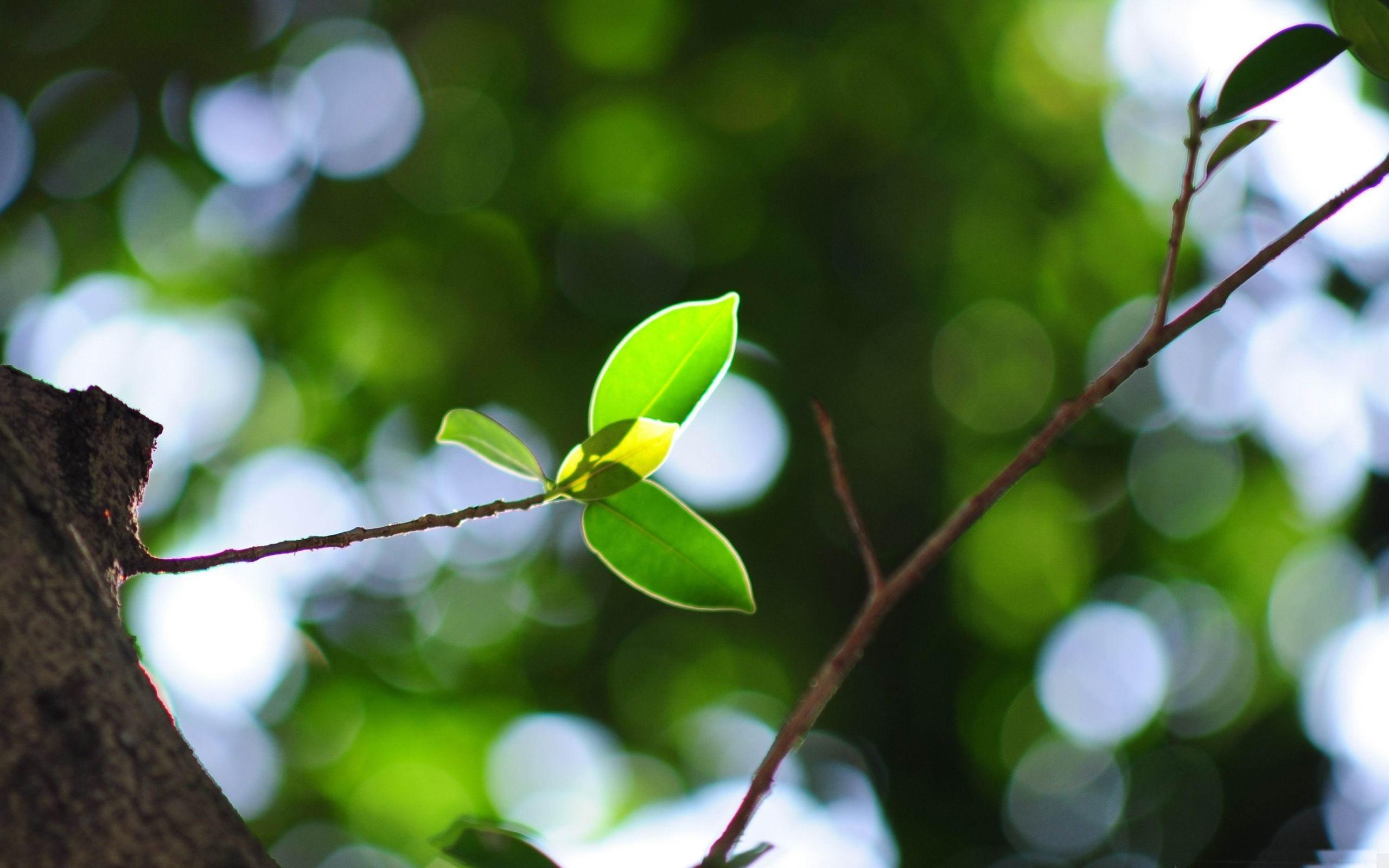 温馨植物高清壁纸