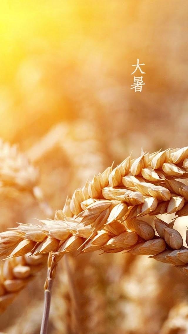 夏季稻田麦穗大自然手机壁纸大全