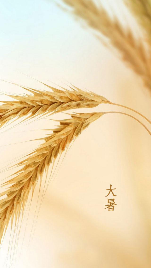 夏季稻田麦穗大自然小米手机壁纸
