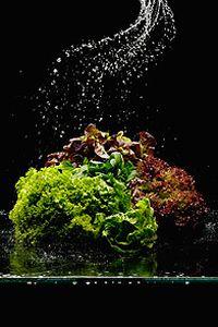 新鲜蔬菜西兰花图片