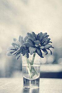 清新大花朵高清手机壁纸