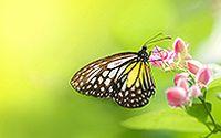 生动精灵蝴蝶唯美特写桌面壁纸大全
