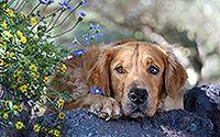 可爱狗狗宽屏壁纸下载