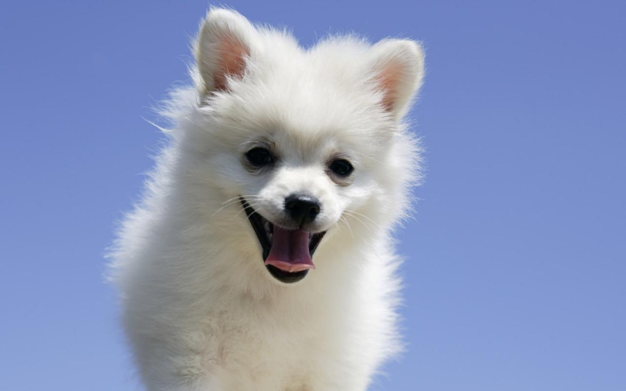 可爱狗狗壁纸桌面
