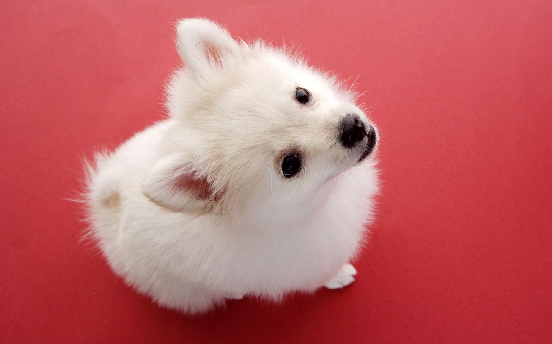 超萌狗狗桌面壁纸高清