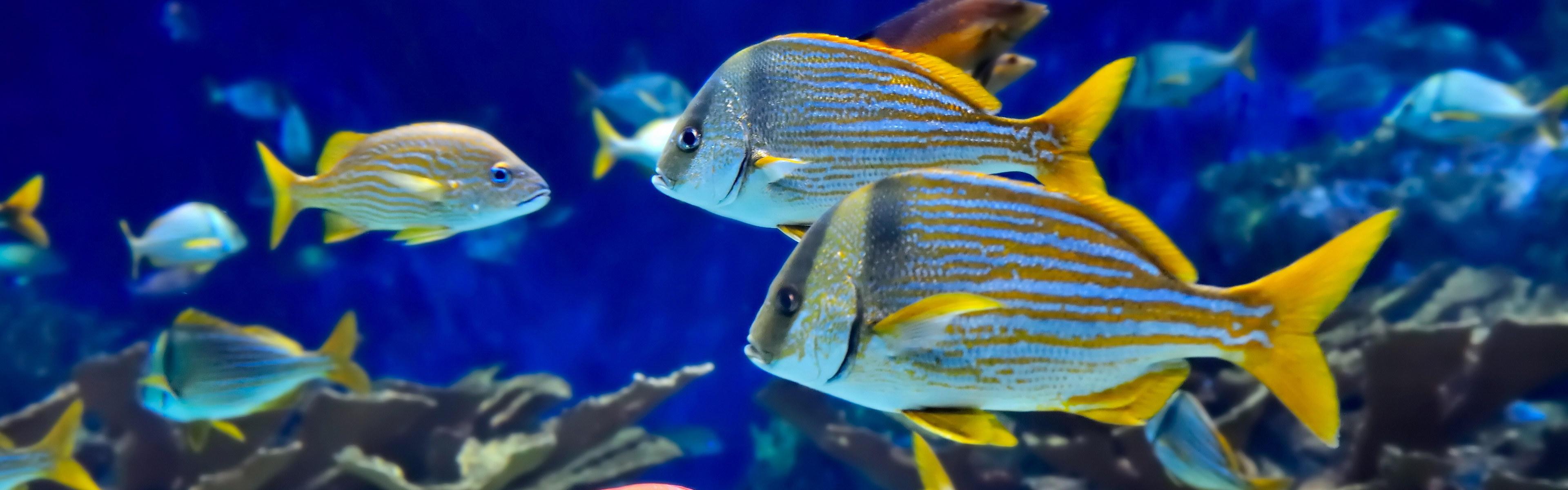 壁纸 动物 海底 海底世界 海洋馆 水族馆 鱼 鱼类 3840_1200