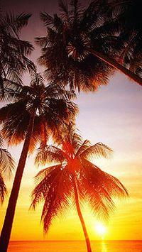 夕阳落日美景手机壁纸