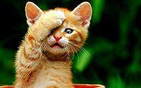 搞怪的小猫桌面壁纸大全