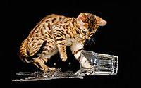 猫咪宠物图片下载