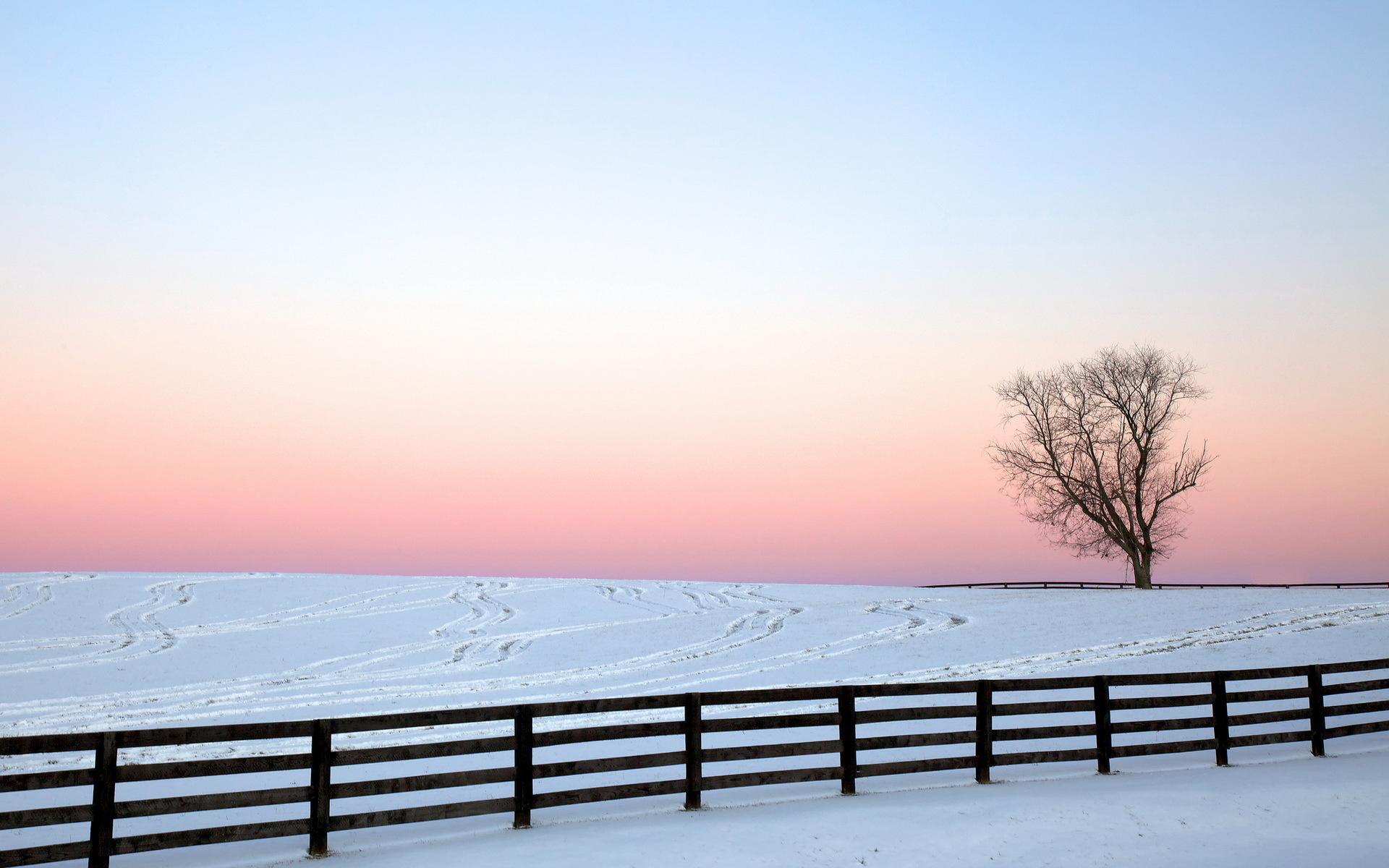 雪中的树冷色风景电脑壁纸下载 高清桌面壁纸下载 找素材网