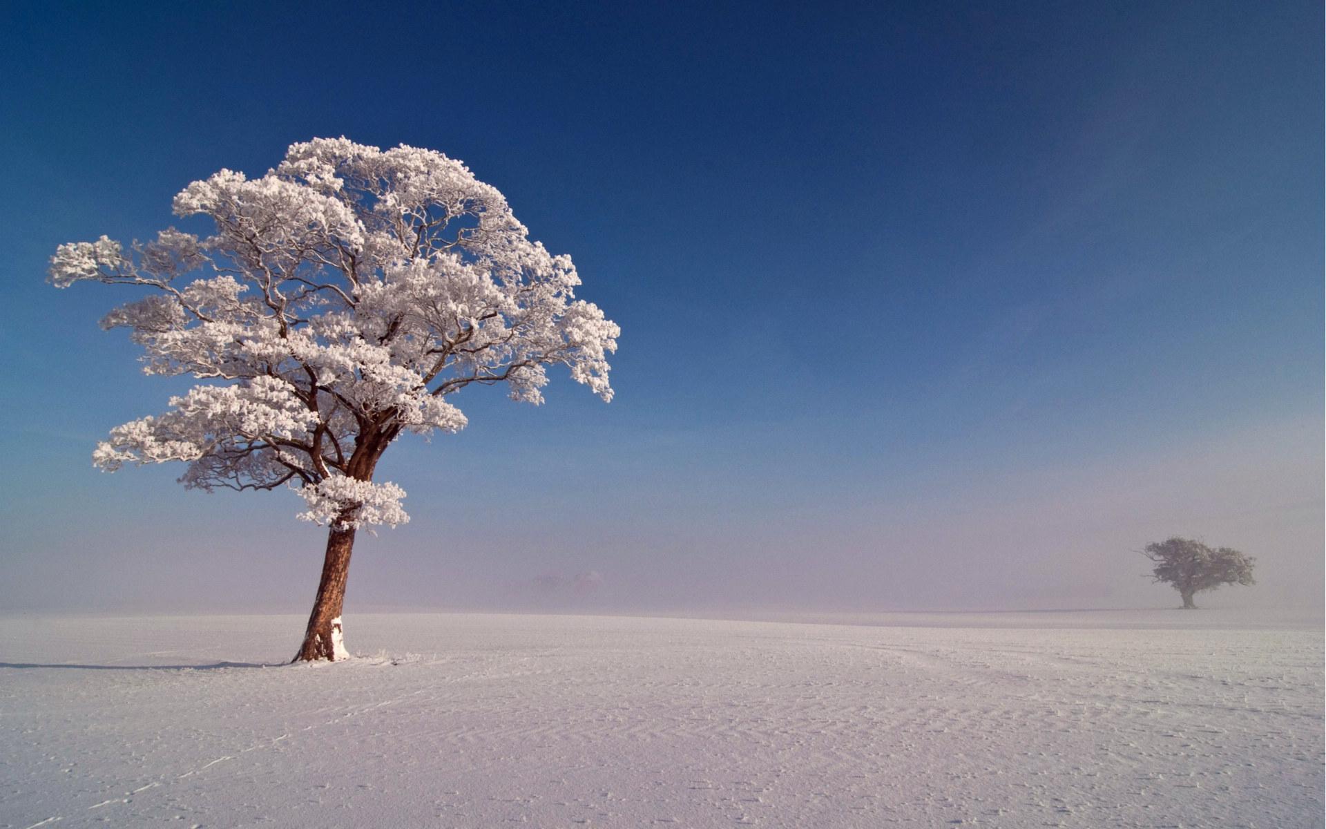 雪中的树冷色风景桌面壁纸大全