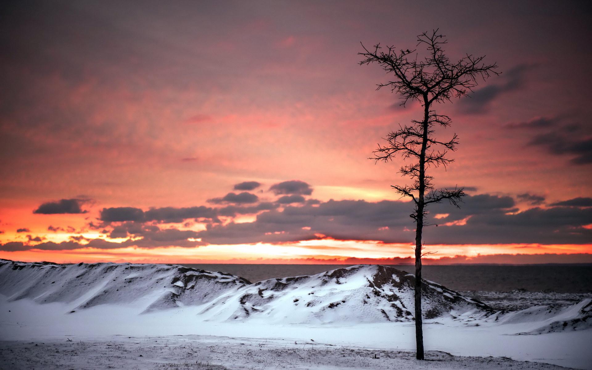 新浪网图标_雪中的树冷色风景桌面壁纸大全 雪中的树冷色风景桌面壁纸大全 ...
