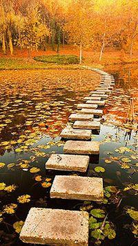 秋季落叶枫叶树木手机壁纸大全