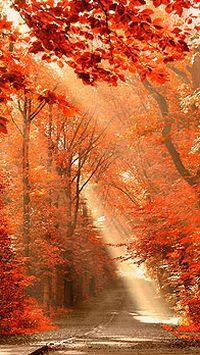 秋季落叶枫叶树木大屏幕智能手机壁纸