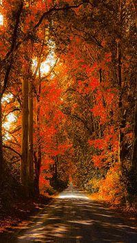 秋季落叶枫叶树木时尚手机桌面