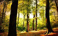 深林树木风景图片