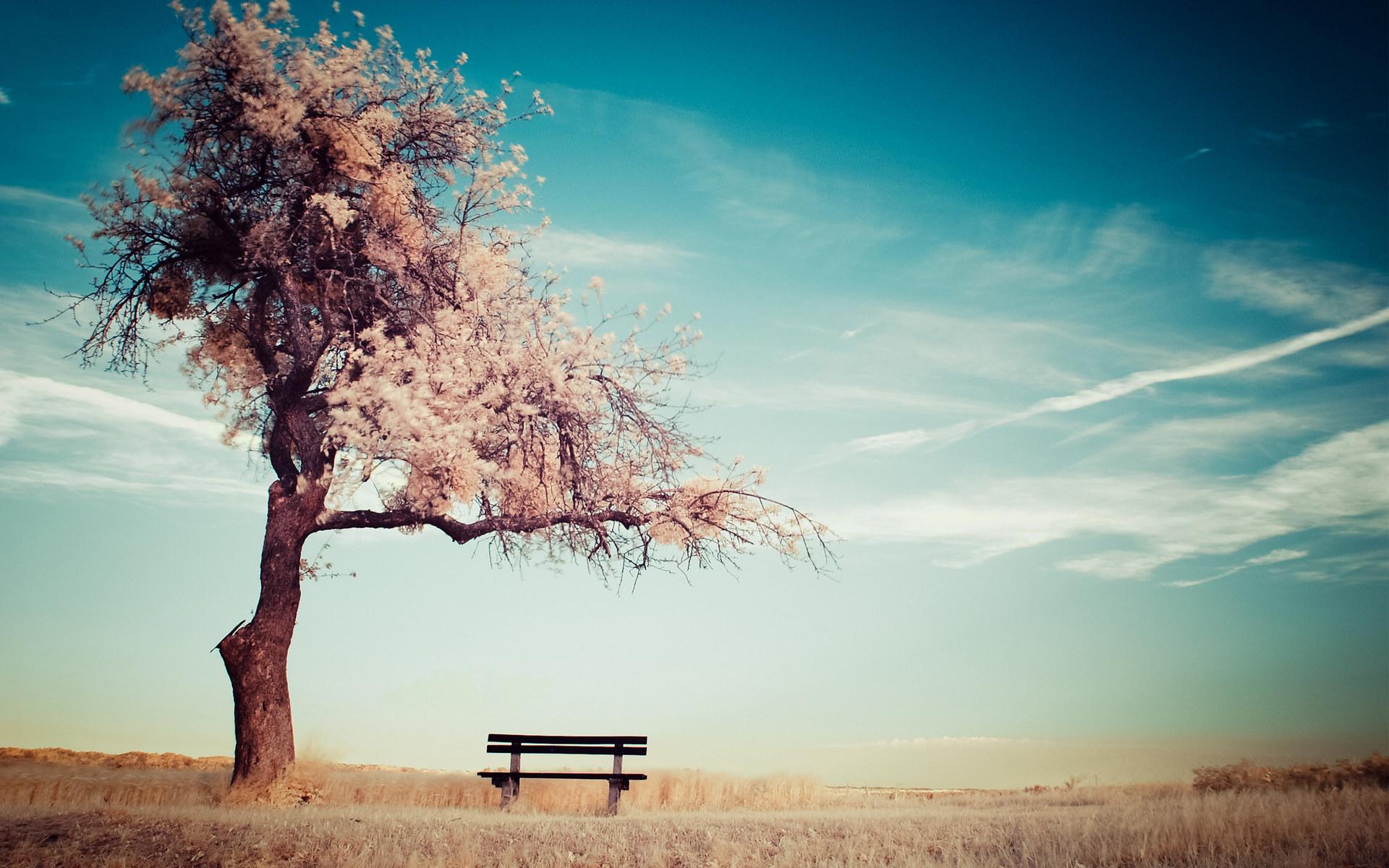 孤独的长椅唯美风景桌面壁纸大全