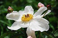 白色自然花朵图片