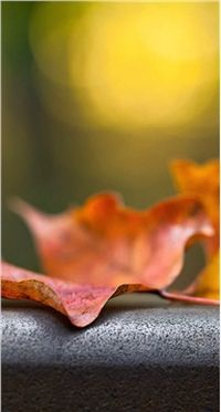 秋天的枫叶iPhone5Siphone5下载