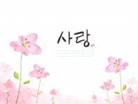 粉色花卉背景源文件
