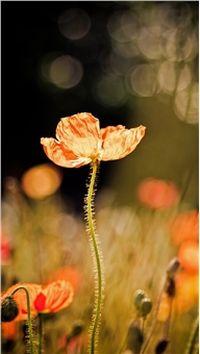 清新微距花卉特显手机壁纸