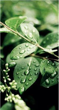 高清小清新绿色植物时尚手机桌面