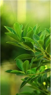 高清小清新绿色植物手机壁纸