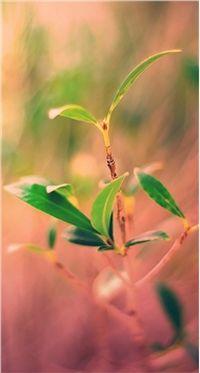 高清小清新绿色植物iphone手机壁纸