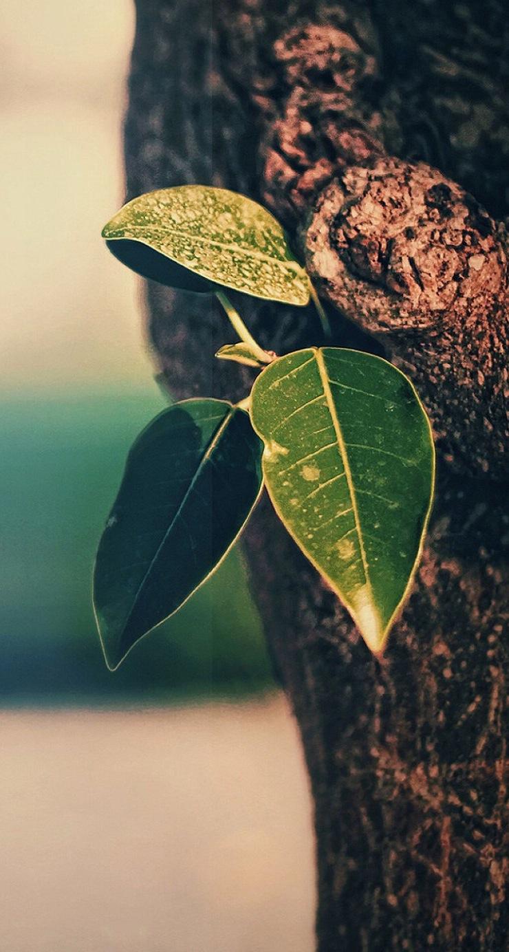 范冰冰性感高清壁纸_高清小清新绿色植物手机桌面壁纸 免费手机壁纸下载-找素材网
