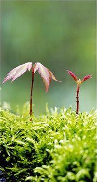高清小清新绿色植物手机动态壁纸