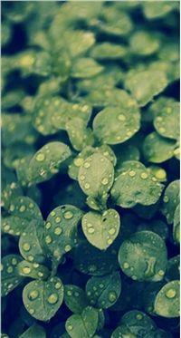 高清小清新绿色植物小米手机壁纸