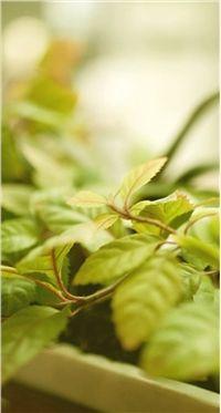 高清小清新绿色植物智能手机桌面壁纸