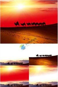 旅游沙漠之舟ppt模板免费下载