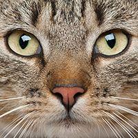 猫脸头像图片下载