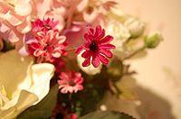 粉色假花图片下载