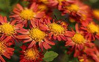 唯美红色花朵图片下载