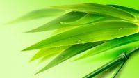 绿色竹叶背景源文件
