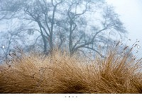 jQuery焦点图插件Fotorama