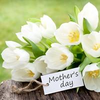 母亲节白色郁金香花束高清图片下载