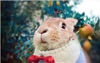 可爱棕色兔子win7桌面壁纸