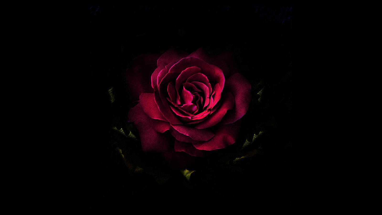 小清新玫瑰花电脑高清桌面壁纸
