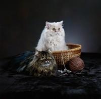 可爱黑白双色猫咪高清图片下载