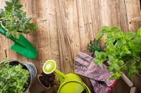 地上美丽盆栽与园丁工具高清图片下载